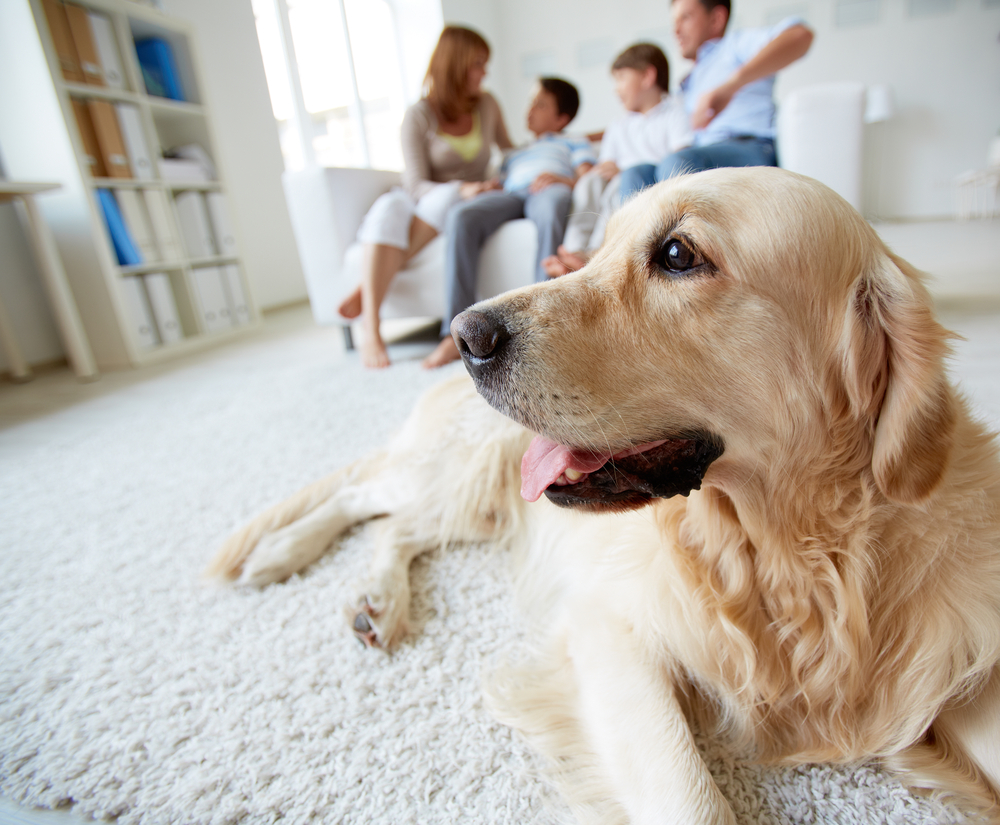 6 Must-Know Heating and Cooling Tips for Pet Owners